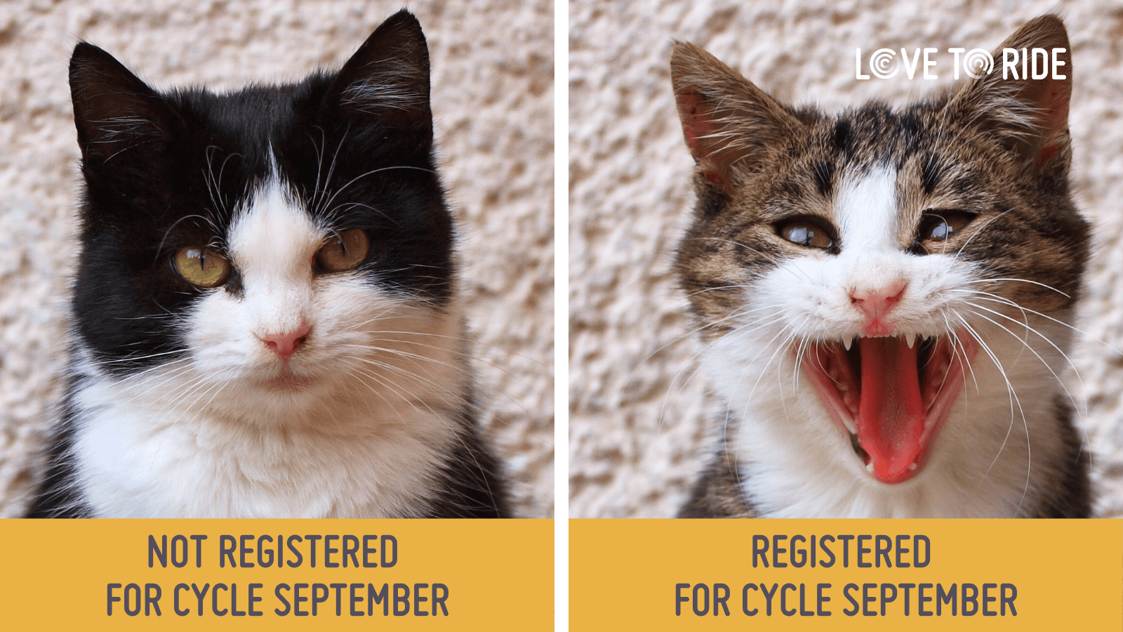On the left, a cat with a slightly grumpy face. Underneath it says 'not registered for Cycle September'. On the right, a cat with a wide open mouth which gives the impression of an excited smile. Underneath it says 'registered for Cycle September'.