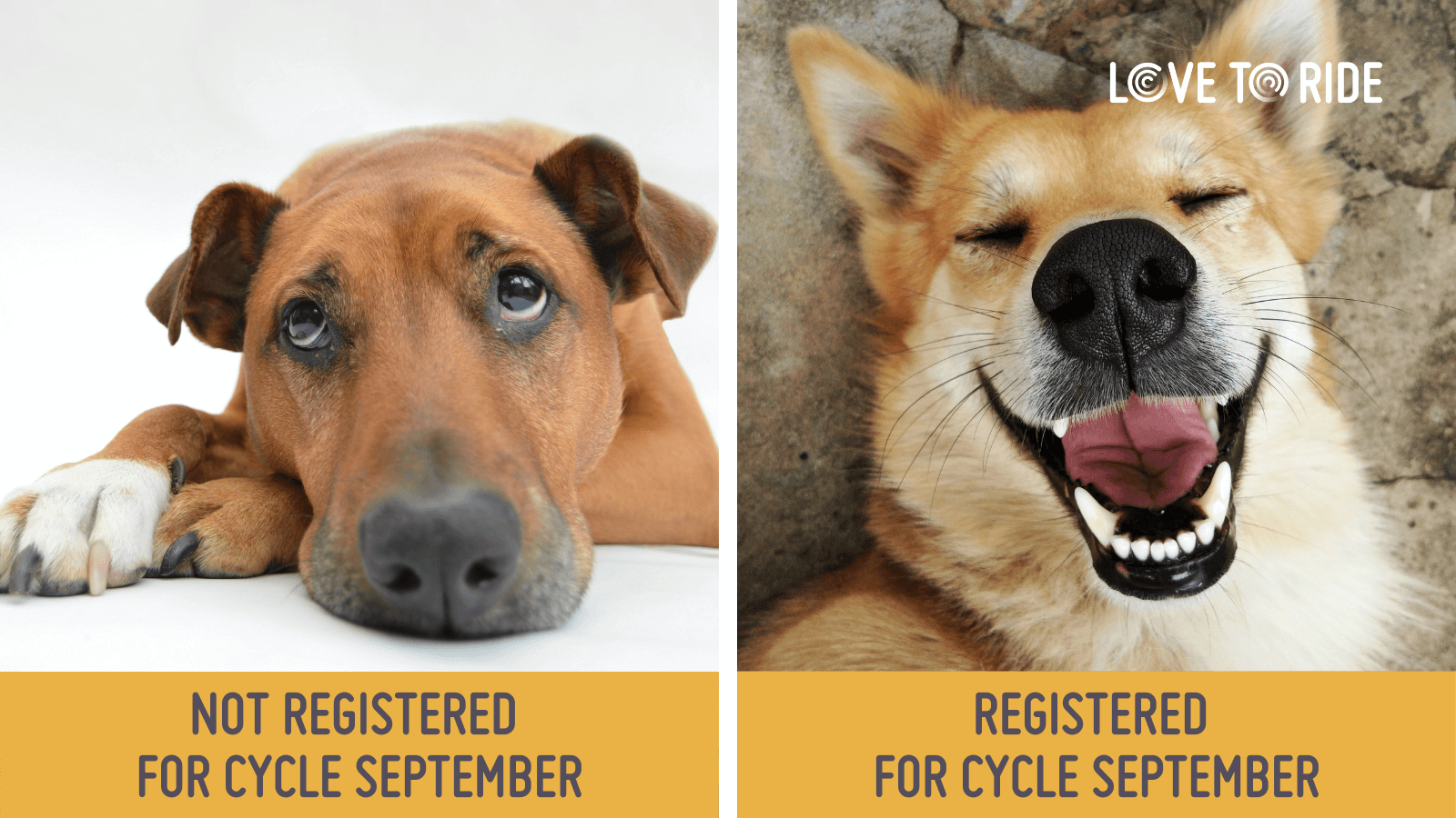 On the left, a dog lying down looking sad and bored. Underneath it says 'not registered for Cycle September'. On the right, a dog with a wide open mouth which gives the impression of a big smile. Underneath it says 'registered for Cycle September'.