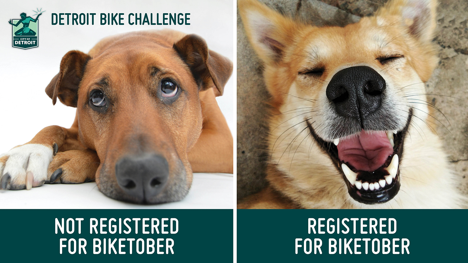 """On the left, a sad looking dog with the text """"Not registered for Biketober"""". On the right, a happy looking dog with the text """"Registered for Biketober"""""""