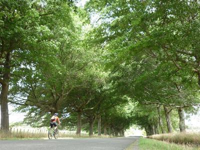Wairarapa Valley Cycleway