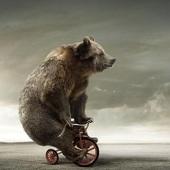 Primary bear2