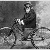 Primary bikemonkey