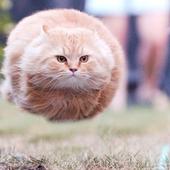 Primary funny hovercat