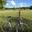 profile image for author Neil Joyce for Tour de Rennie Grove
